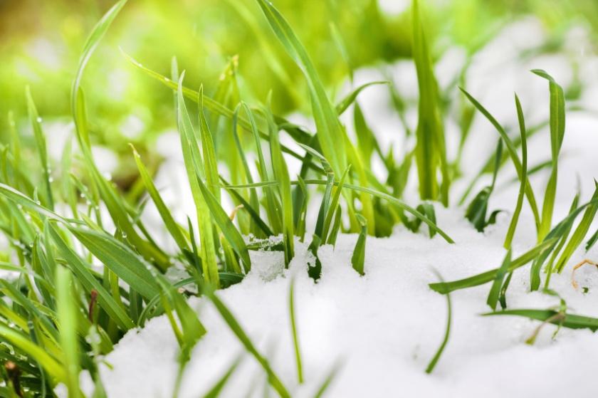 grasssnow